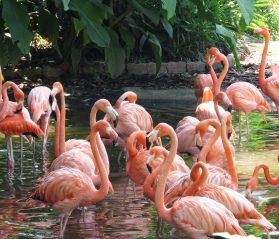 family-friendly fort lauderdale itrip vacations