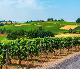 willamette valley guide itrip vacations