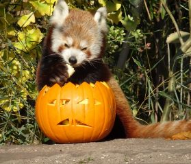 zoos in southeast halloween itrip vacations