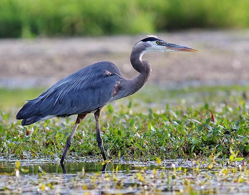 hilton head parks birds wildlife